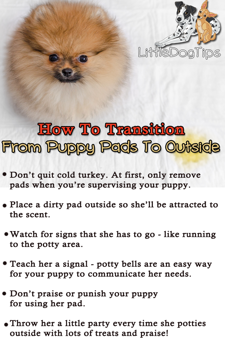 Transitioning Your Puppy From Pads To Going Outside Follow These Steps To Easily Quit Potty Pads Puppy Pads Puppies Puppy Training