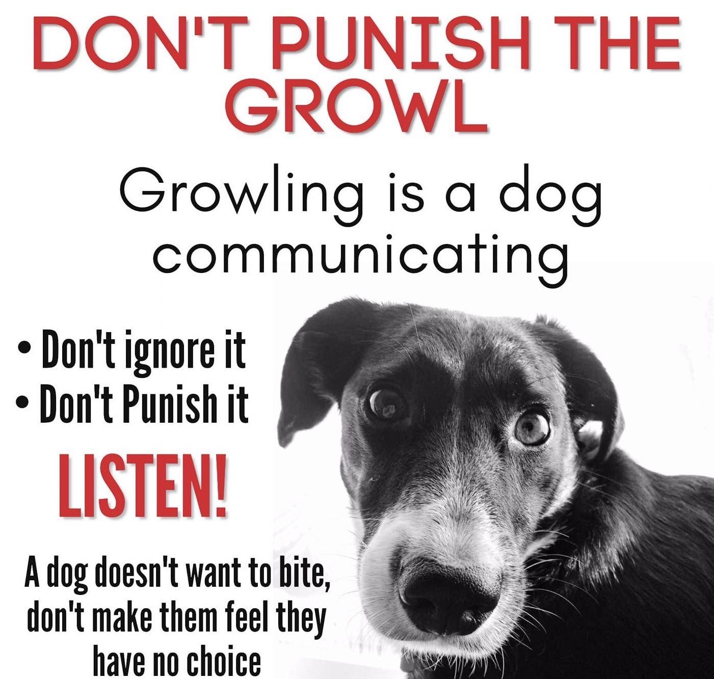 Pin by Xander on Puppers and Doggos in 2020 Dog growling
