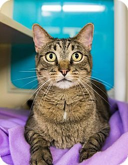 9 2017 Good With Kids Very Nice Boy Wants To Be Your One Snd Only Cat Adoption Saving Cat Pet Adoption