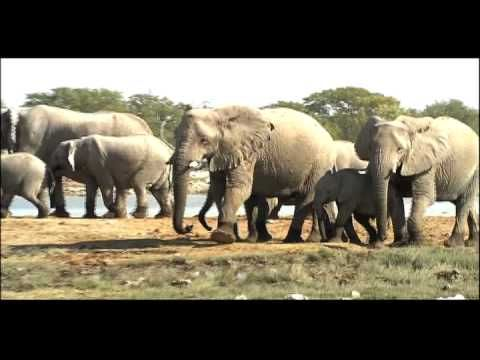 ▶ Populations Biotic Potential | Biology | Ecology - YouTube