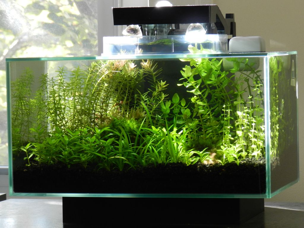 micr0's fluval edge | terrarium aquariam | pinterest | aquariums