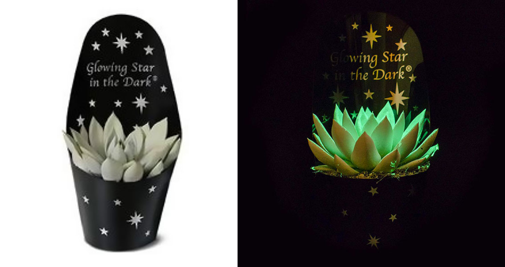 You Can Now Get Spooky Little Succulents That Glow In The 400 x 300