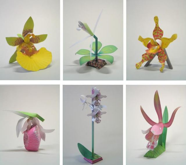 Here is a series of 25 realistic paper models of orchid-species  created by Dutch designer Maarten Janssens , from 3 Eyed Bear website,  f...