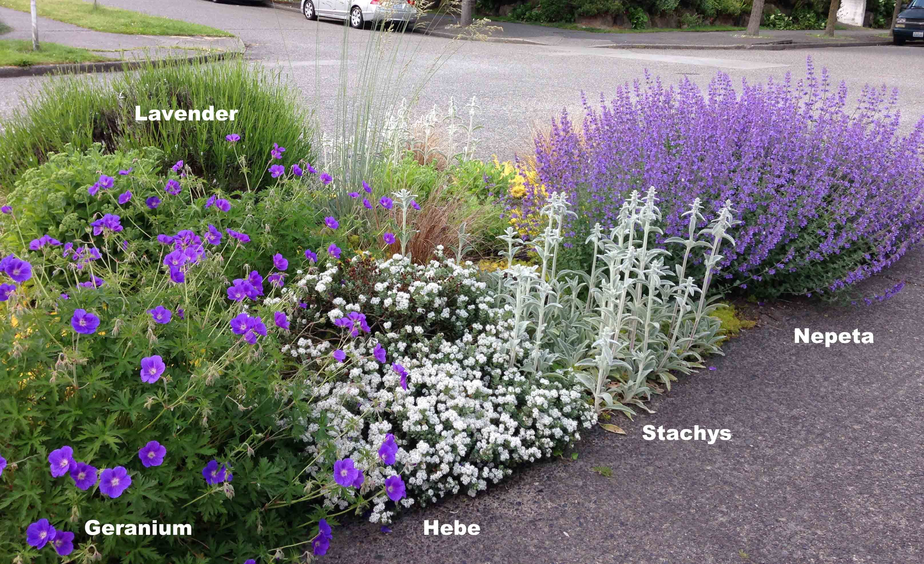 May Plant Pairings Limit The Color Palette Hydrangea Landscaping Plants Garden Landscaping