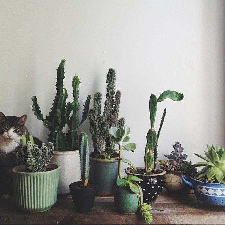 Composition Cactus Interieur Deco Pinterest Jardiniere