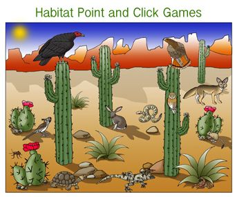 Animals of the Desert Bulletin Board Inspiration ...