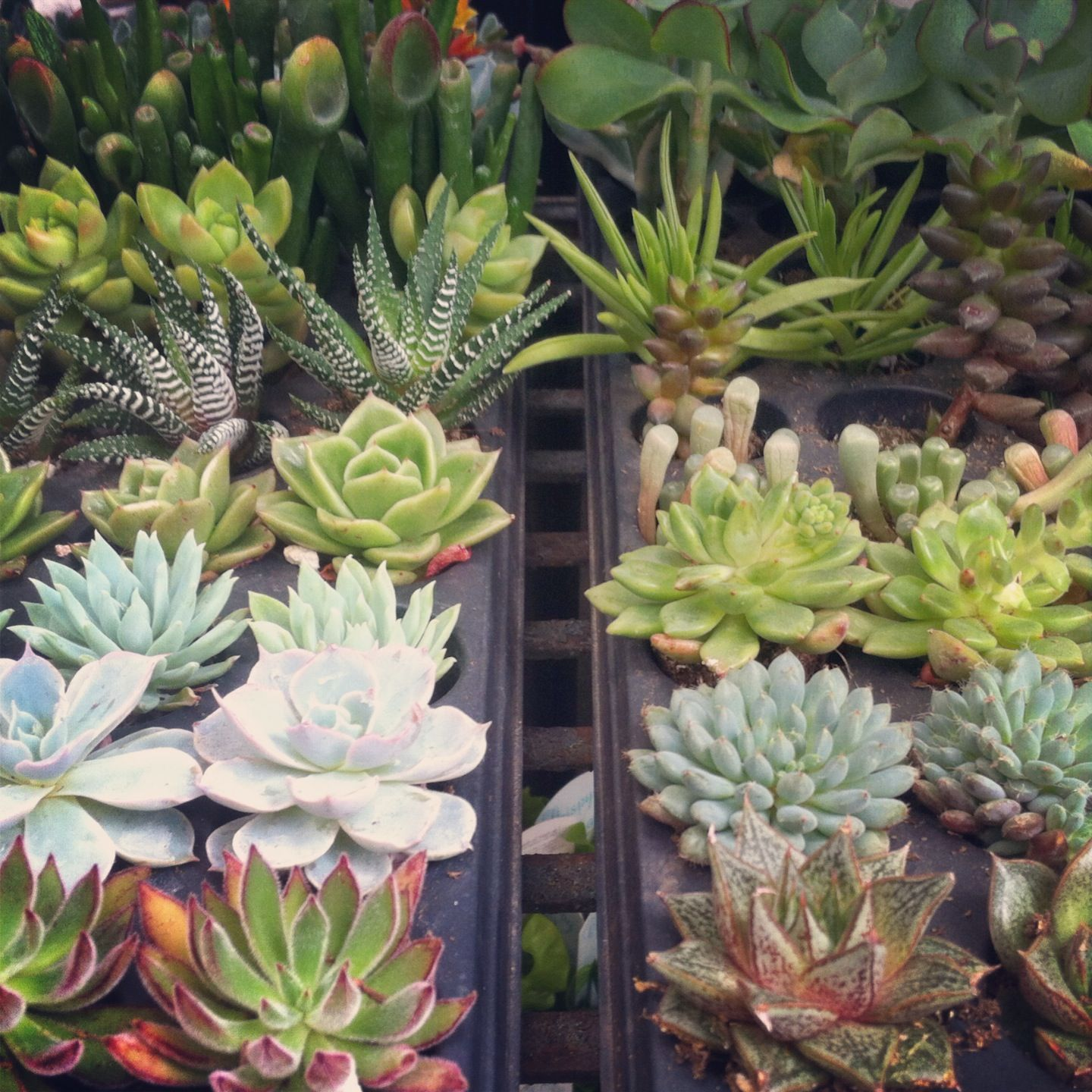 New Succulents Have Just Arrived Come Visit Garden Supply Co In