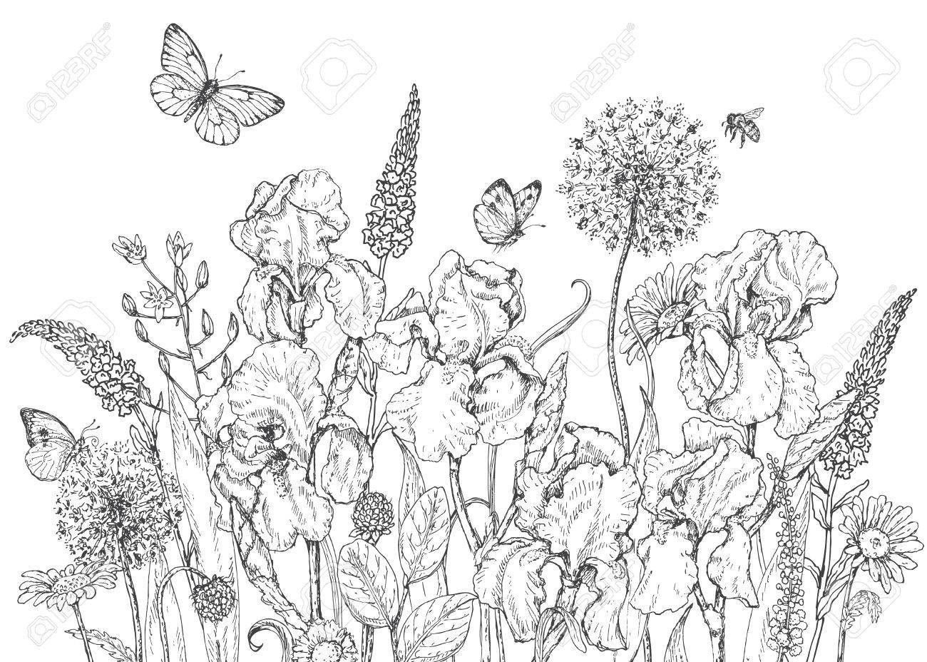 Best Hand Drawn Line Illustration With Iris And Insects Picture