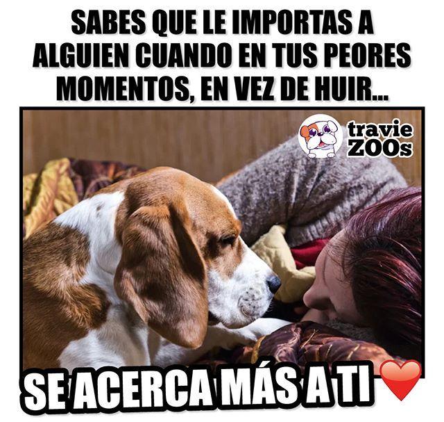 Amor Incondicional Dogs Perros Incondicional Love Amor Mascotas Frases Amor De Perro Amantes De Perros