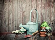 VivaGreen's Top 10 Compost Tips