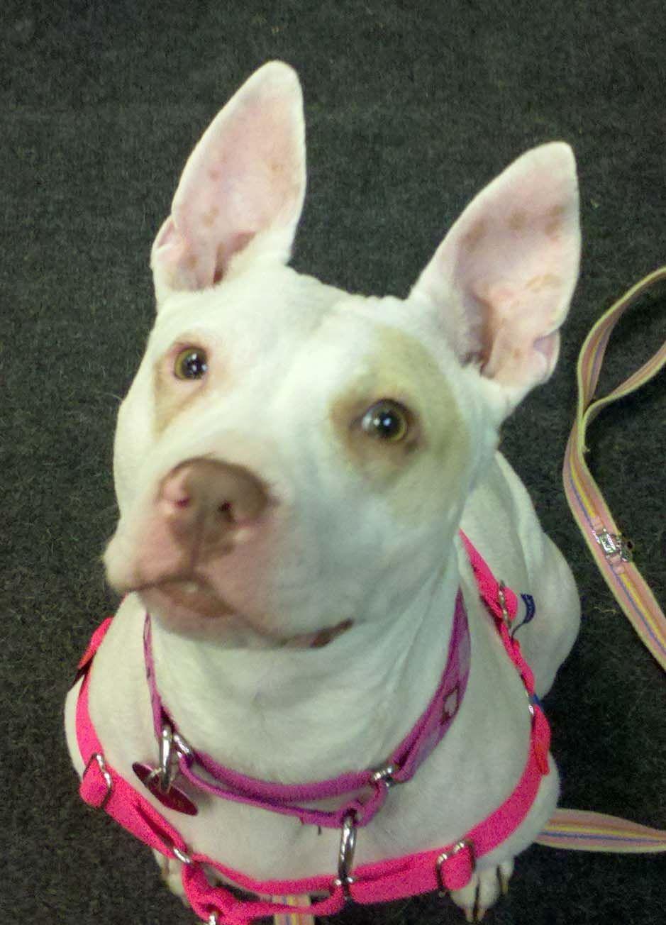 MetroDetroit, Michigan Dog Training and Day Care Dog