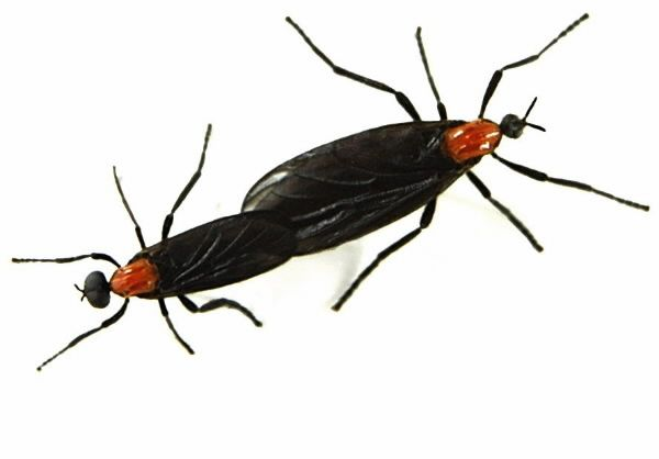 How to Get Rid Of Love Bugs | What's bugging you? | Borboletas