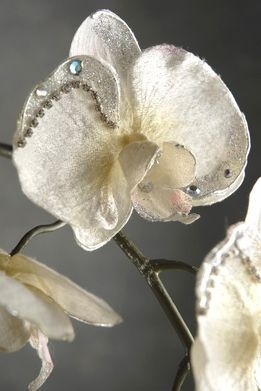 Pretty Jewel Orchid White Orchids Orchids