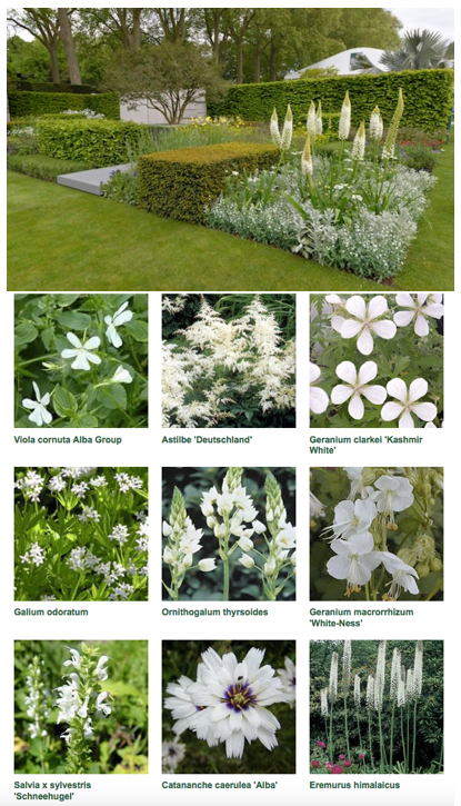 Telegraph Garden Chelsea Flower Show 2015 The Telegraph Garden by garden designer Marcus Barnett from RHS Chelsea Flower Show 2015 with plant list