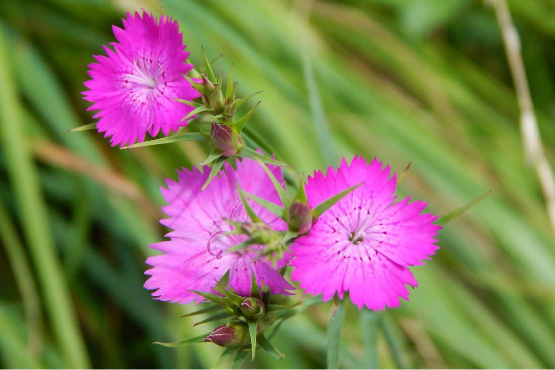 Fiori Gialli Spontanei Primaverili.I Fiori Spontanei Del Biellese Fiori Fiori Selvatici E Giardinaggio