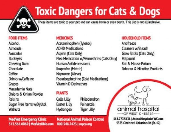 Aspca Toxic Foods For Dogs