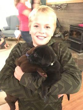 Labrador Retriever puppy for sale in SPRING LAKE, MI. ADN
