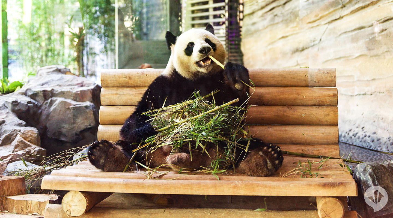 Panda Garden . zoo architecture   dan pearlman in 2020 ...