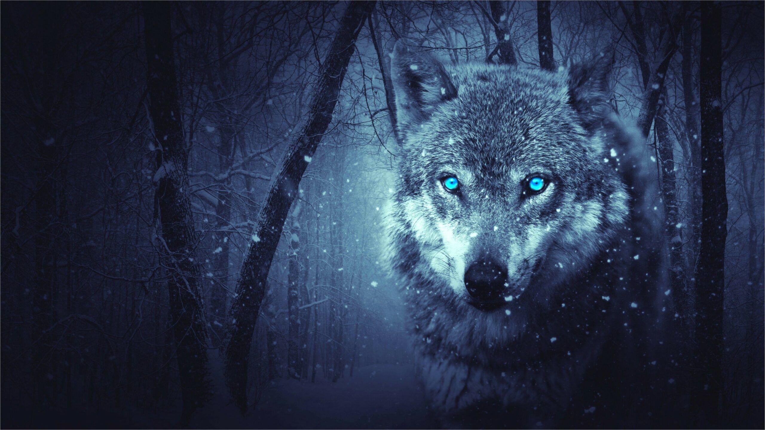 2560 X 1440 Blue Wolf Wallpaper 4k In 2020 Wolf Wallpaper Fantasy Wolf Animal Categories
