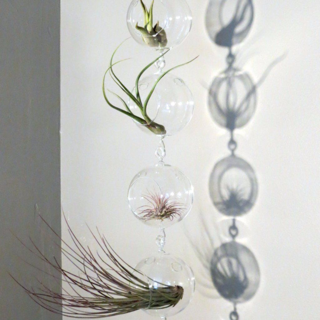Vertical garden display featuring terrariums with double hooks and