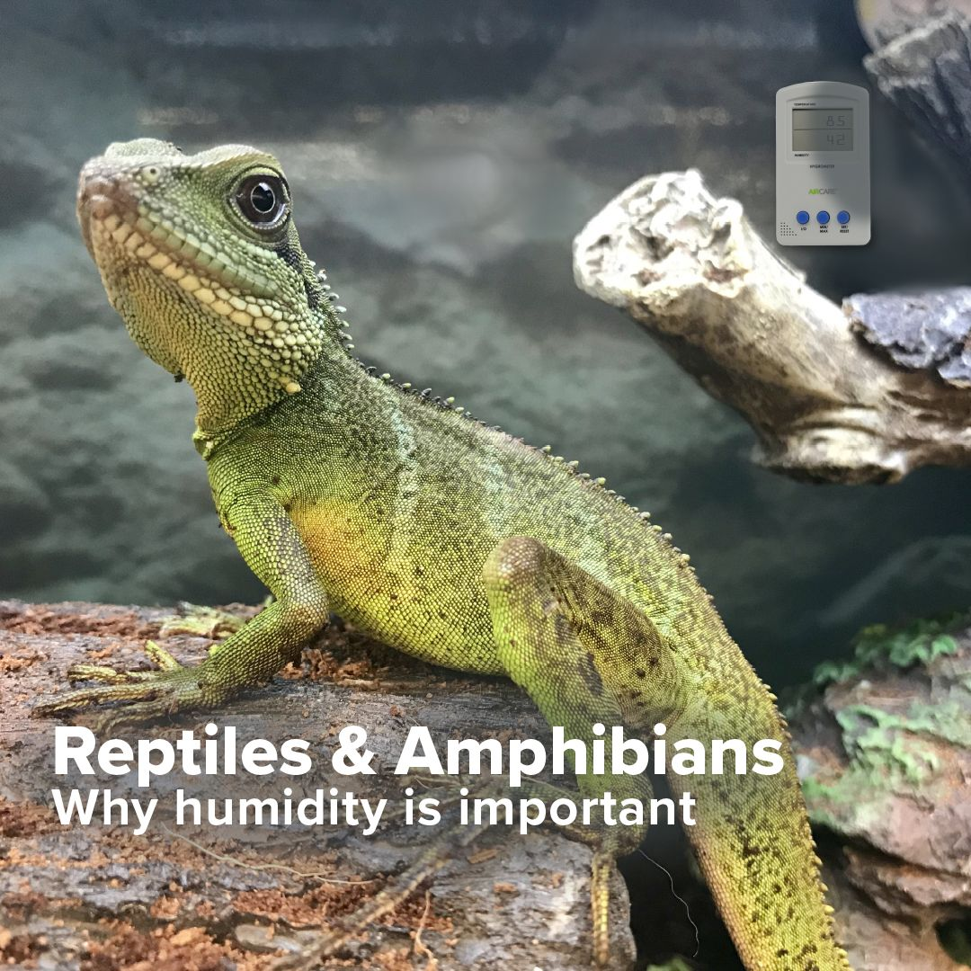 Dry Skin And Dry Lips Are An Inconvenience For Humans In The Wintertime However For Reptiles And Amphibians Proper Humidity Amphibians Reptiles Pet Enclosure