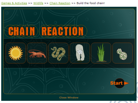 Learn about food web with food chain games. Educational games ...
