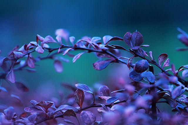 cold spectrum iv, via Flickr. #Blue #Lavender