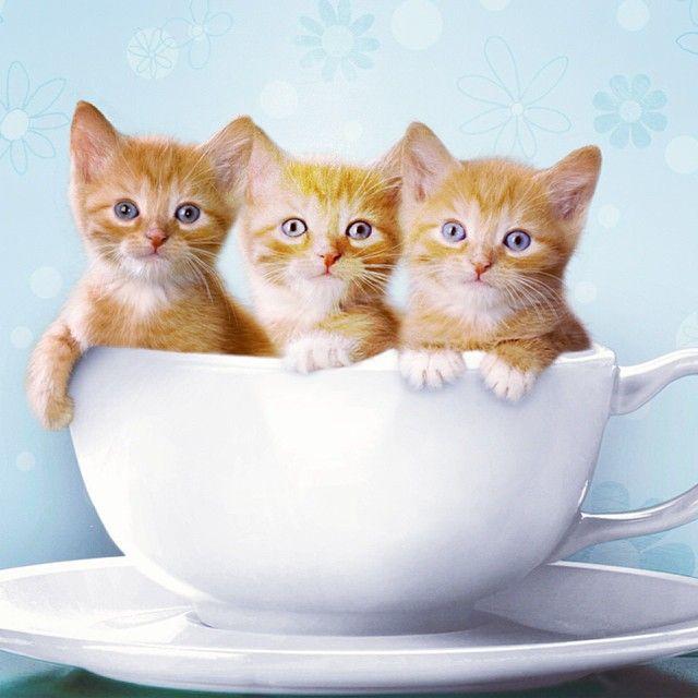 3 Little Kittens Gatos Tiernos Imagenes De Animales Tiernos