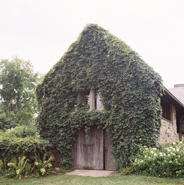 vine covered barn