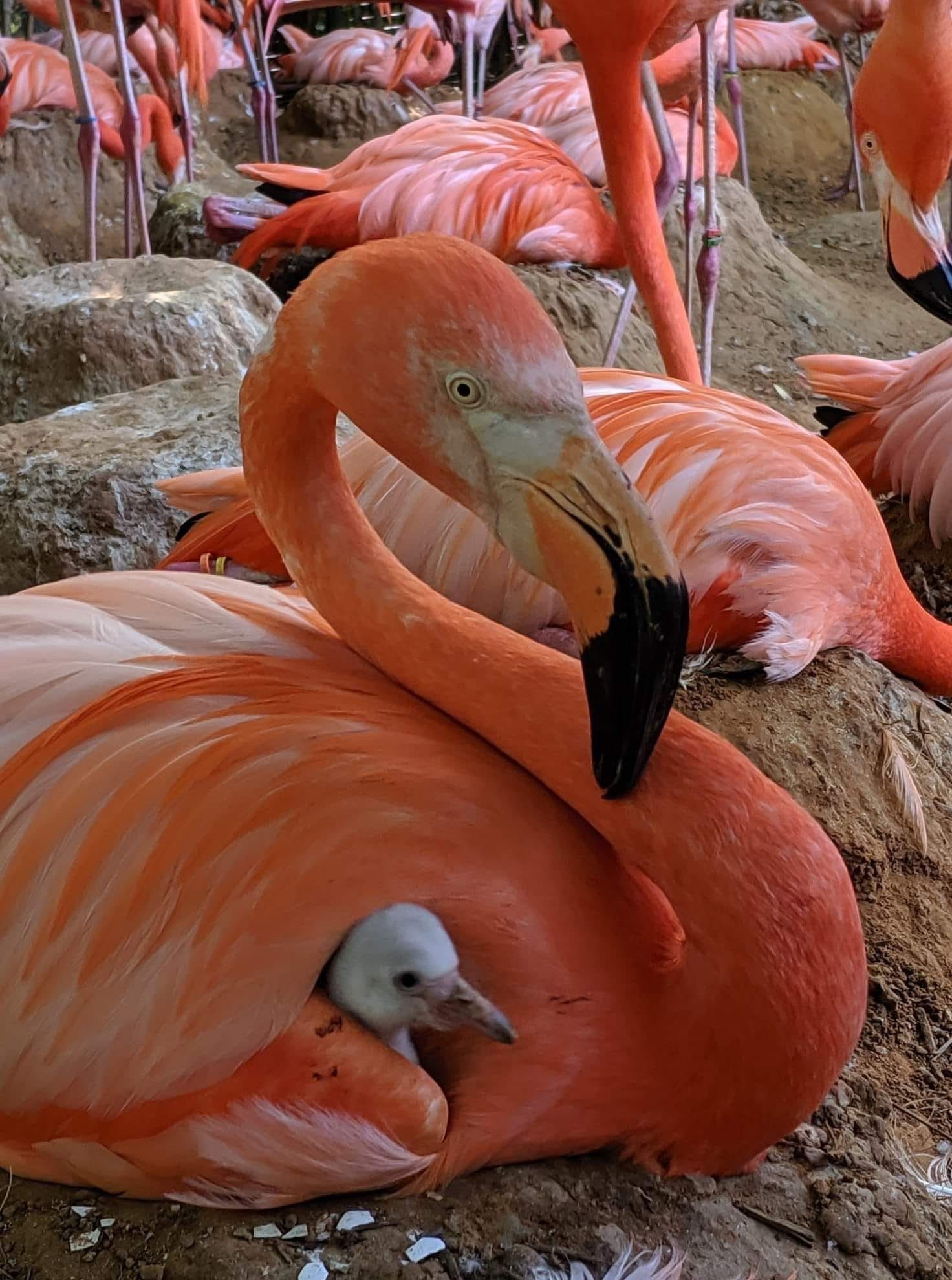 Pin De Elena Elizabeth Colmenarez En Aves Pajaros Hermosos