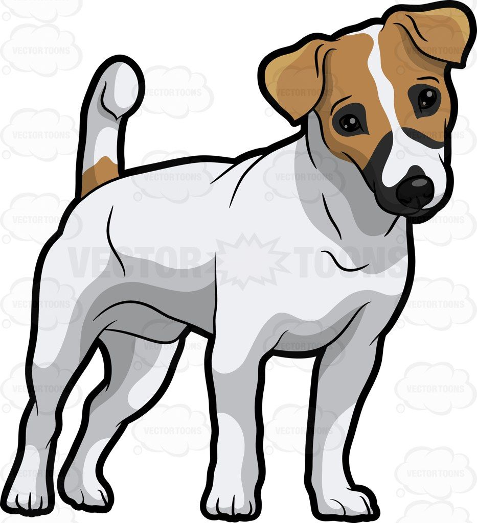 An Adorable Jack Russell Terrier Pup Cartoon Stock Clip Art Vector Toons Dog Drawing Dog Artwork Jack Russell Dogs