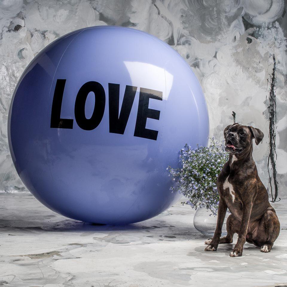 5 foot Big Love Ball with Kingston | Color : Hazy Cosmic Jive | Photo by Bob Garlick