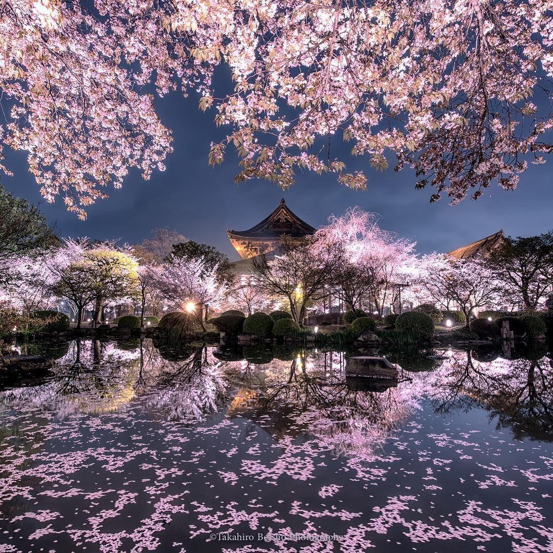 "todayintokyo:  ""Cherry blossoms by takahiro_bessho, as seen on Tokyo Camera Club  """