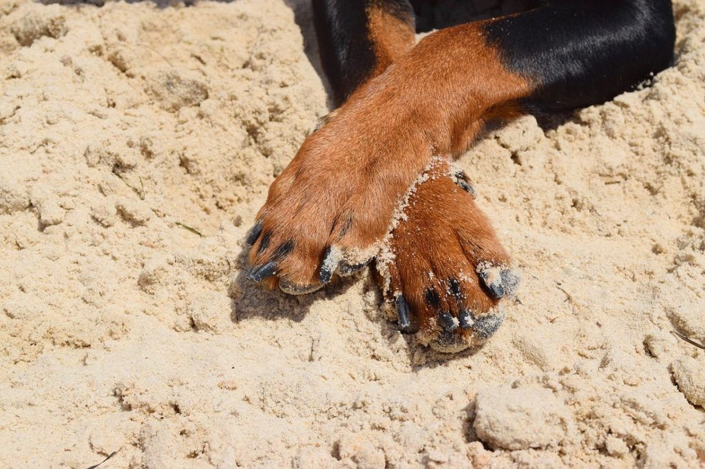 Help! My Dog's Paws Are Red Why do dogs lick, Cute dogs
