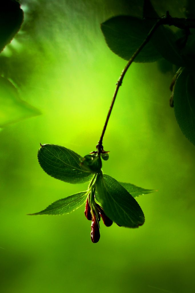 calming green