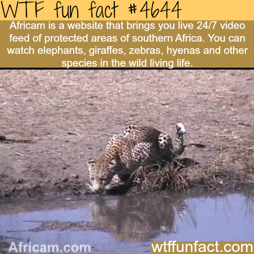 Africam is a 24/7 website to watch South African animals in their natural habitate