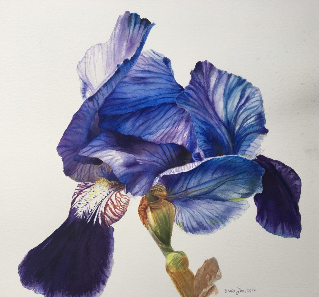 Rose paintings and flower paintings in watercolor and oil blue iris flower painting in watercolor izmirmasajfo