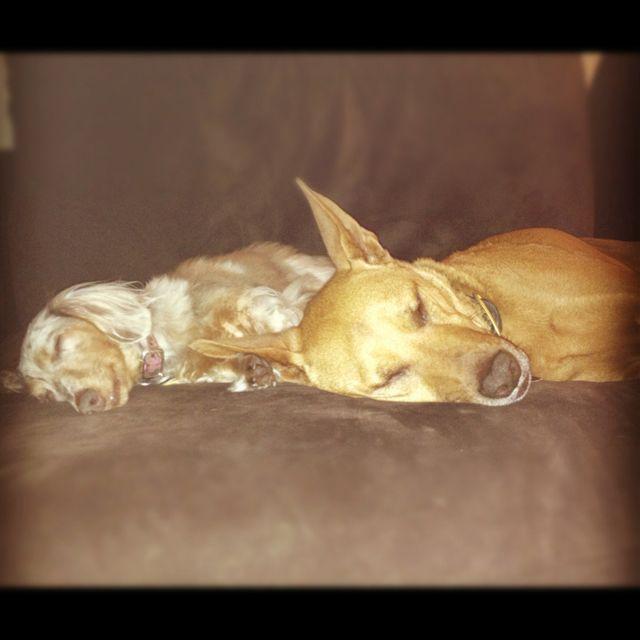 Sleeping Buddies ❤