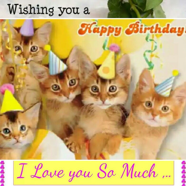 Pin by Leslie Brenner on birthday wishes Funny happy