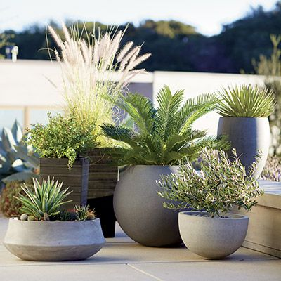 Container Garden Ideas | Garden ideas, Container gardening and Gardens