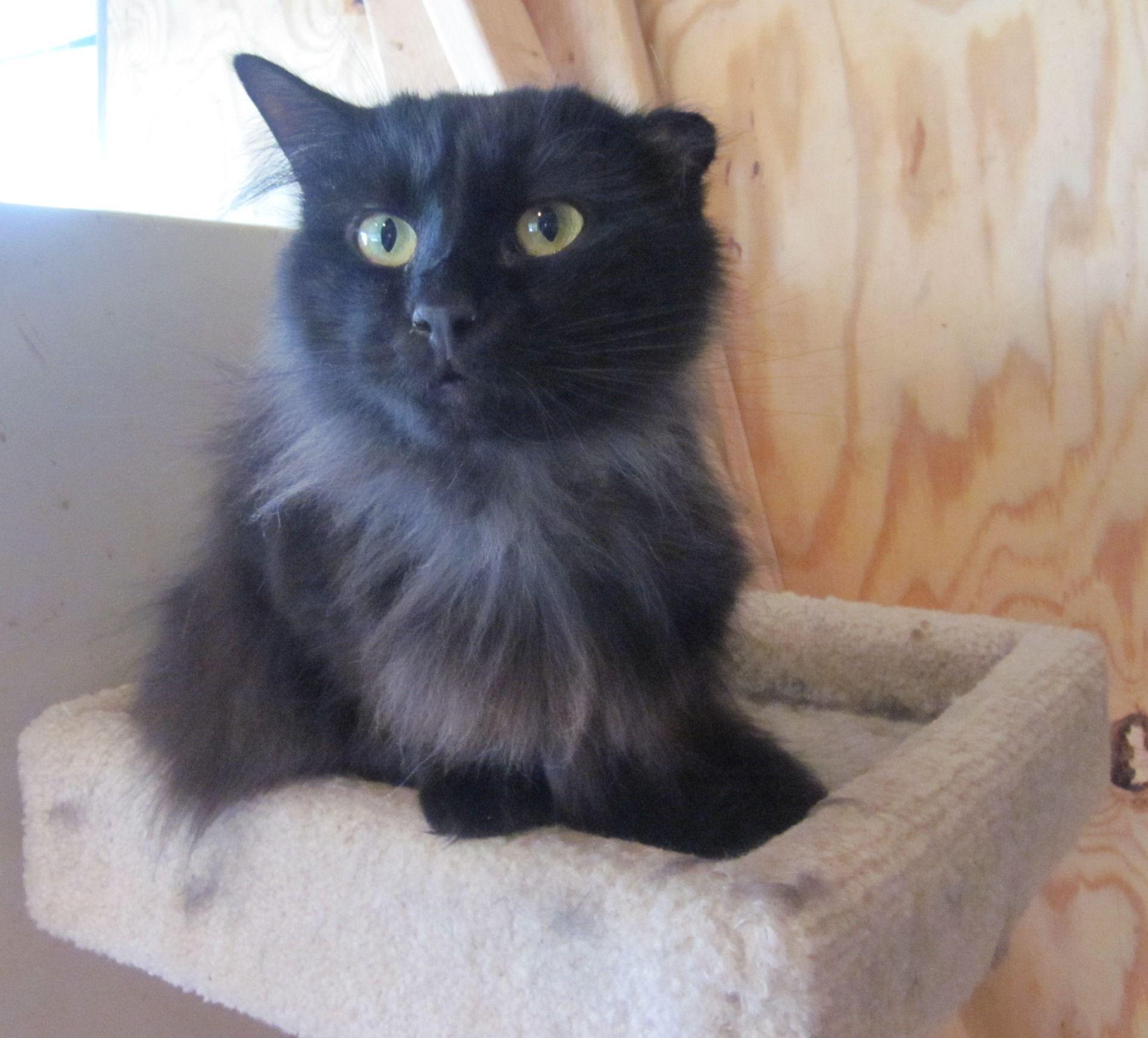 Ebru Sarpman adlı kullanıcının Siyah Kedi panosundaki Pin
