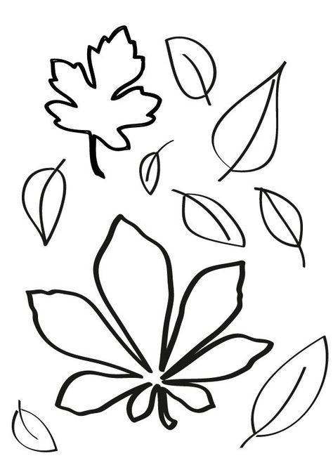 Schneckelinchen Erklärt Darum Werden Die Blätter Im Herbst Bunt