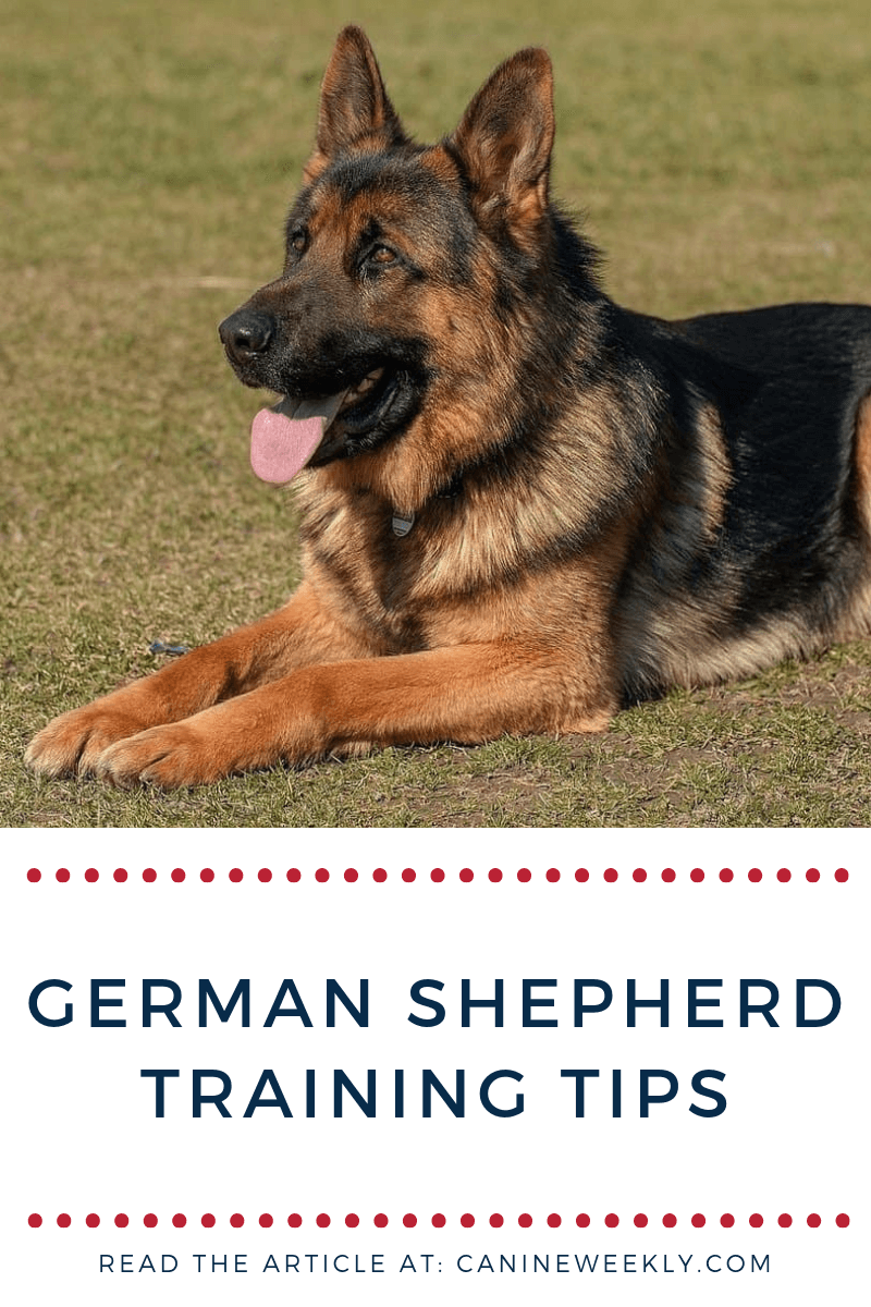 7 German Shepherd Training Tips Effective Strategies German Shepherd Training Dog Training Obedience German Shepherd