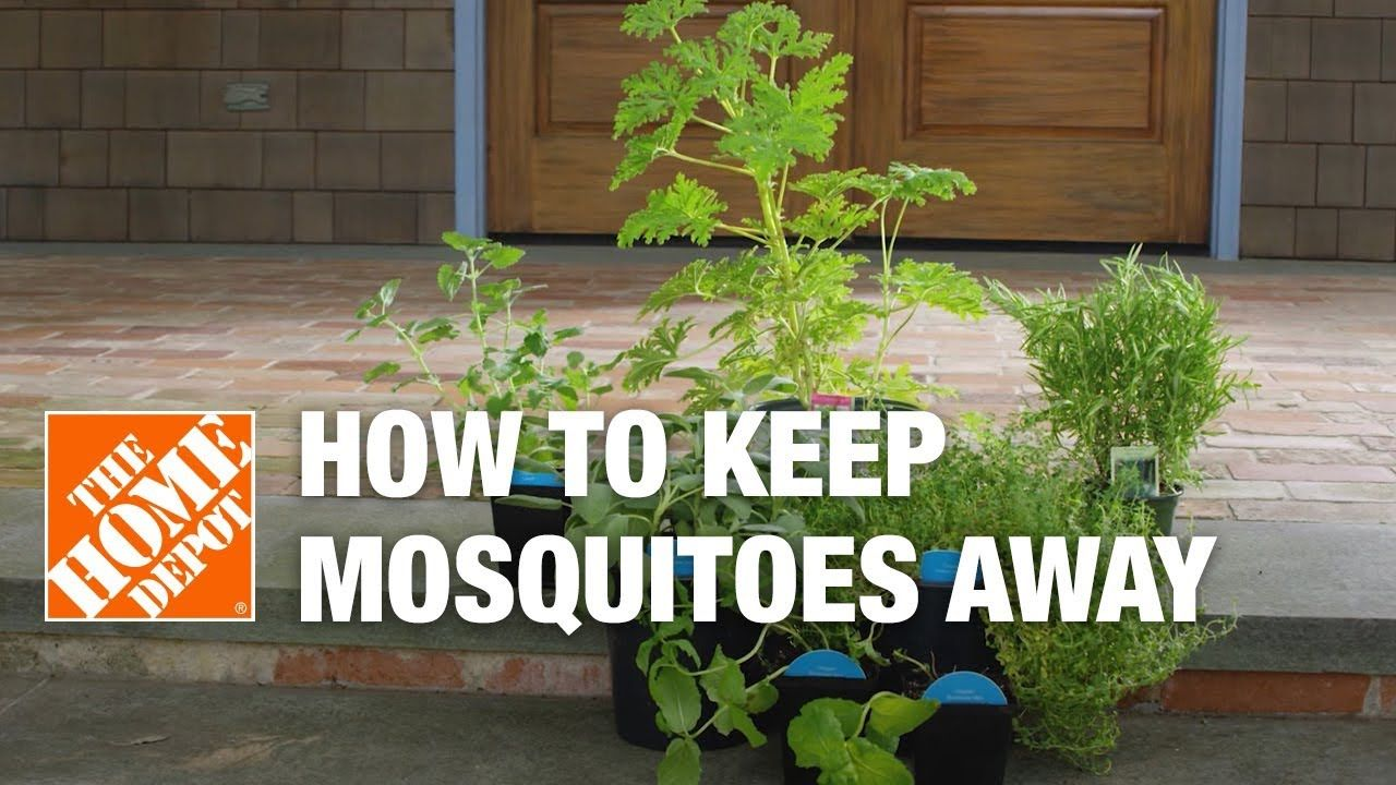 Keep mosquitoes away from your yard this summer using