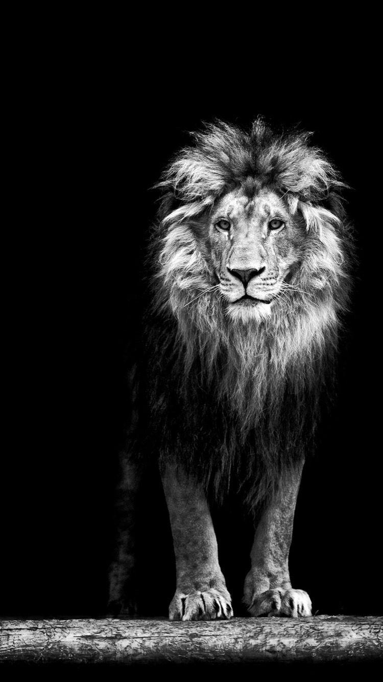 Epingle Par Rishabh Pandey Sur Iphone Wallpaper Lion Noir Et Blanc L Art De Lion Fond D Ecran Lion