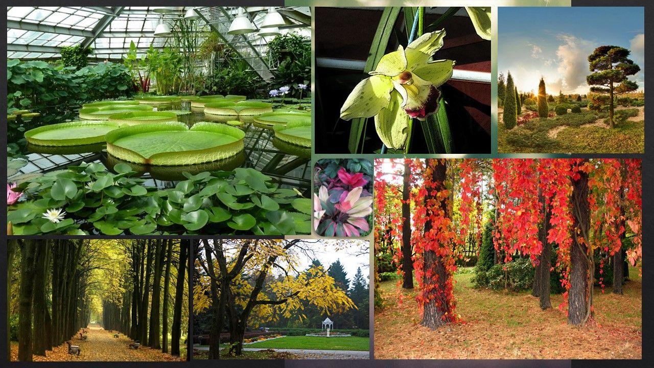 Я практически ни бельмеса не понимаю в растениях, но нежно люблю наш ботанический сад. Во всяком случае из мест, где мне приходилось рисовать в летнюю практику, это было самое приятное.
