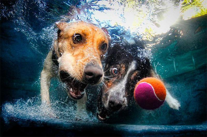 """""""Собаки под водой""""   Смешные животные, Фото собак, Веселые ..."""
