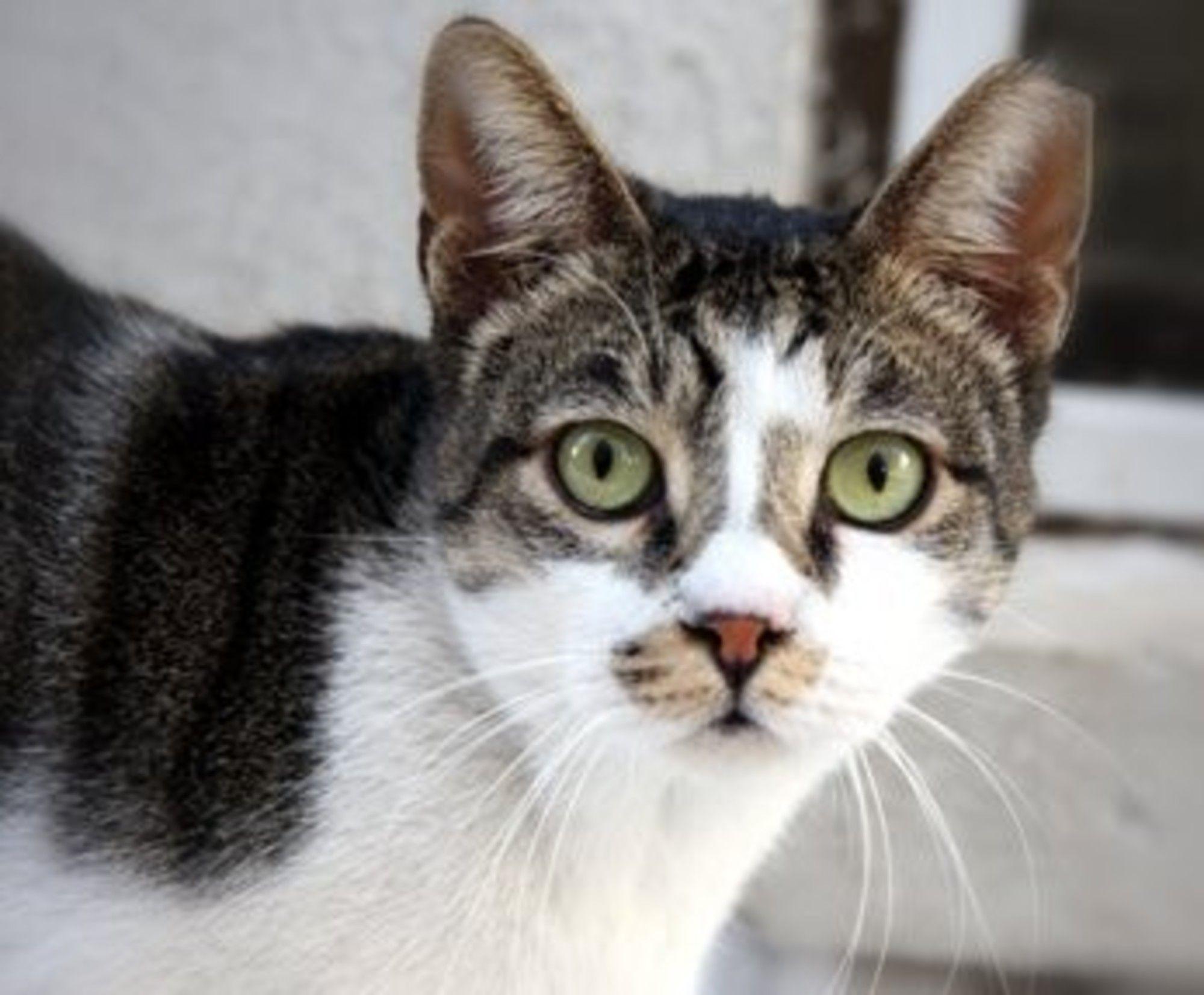 Vomiting in Cats Cats, Cat urine, Cat throwing up