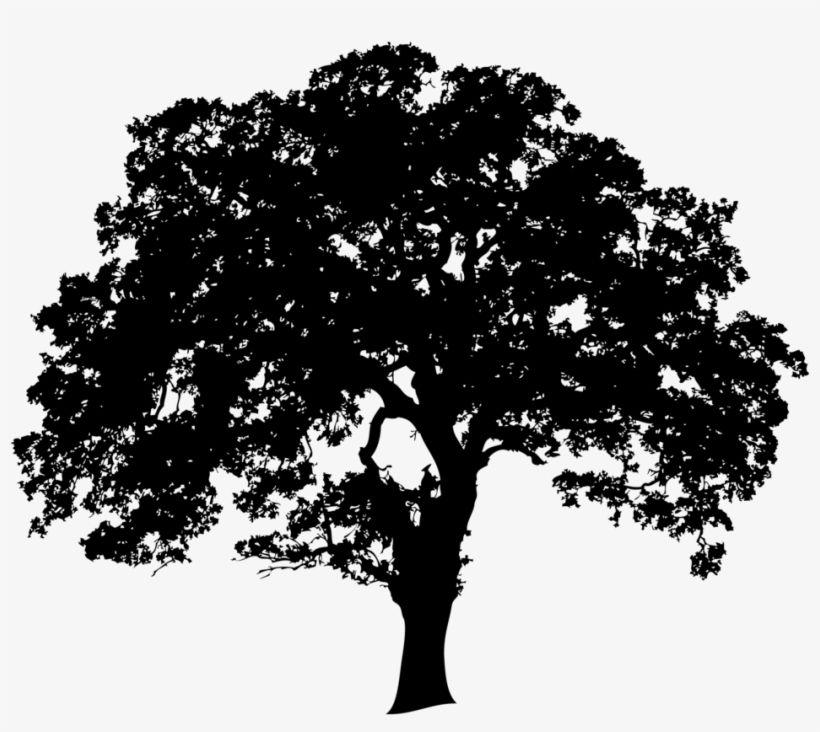 Google Image Result For Https Www Nicepng Com Png Detail 109 1092598 Landtrusttree 01 No Edging Oak Tree Silhouette Png In 2020 Oak Tree Image Google Images