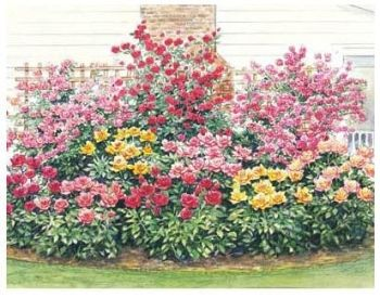 Preplanned rose garden use special coupon g5666 for 3 for Free flower garden designs and layouts